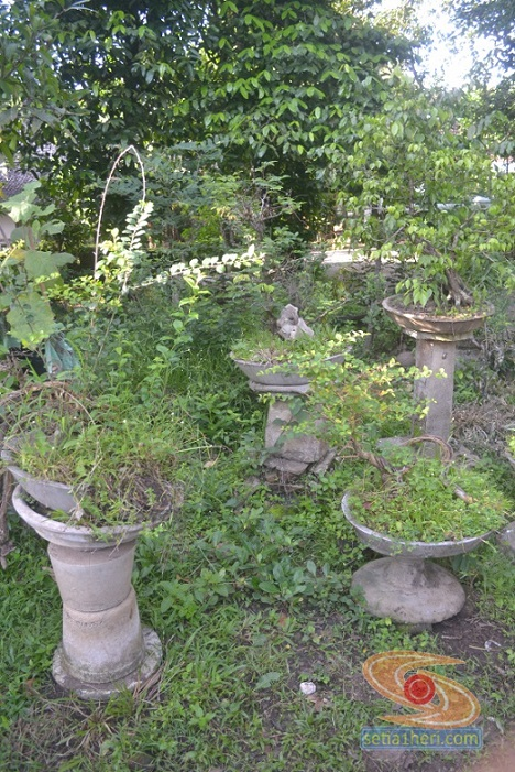 bonsay yang tinggal kenangan