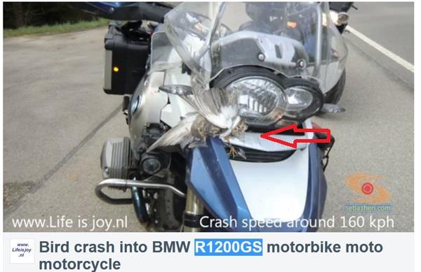 motor BMW R1200GS menabrak burung copy
