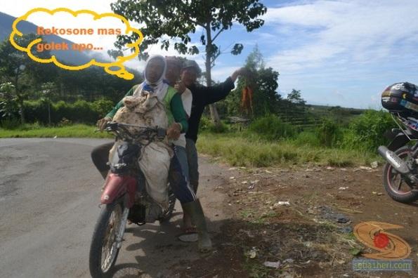 pekerja kebun di bumi aji batu malang (2)