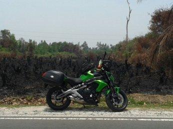 dipinggir hutan terbakar kalimantan