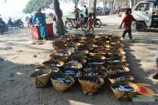Honda Fun Turing with Blogger ke Pantai Papuma Jember 2014 (56)